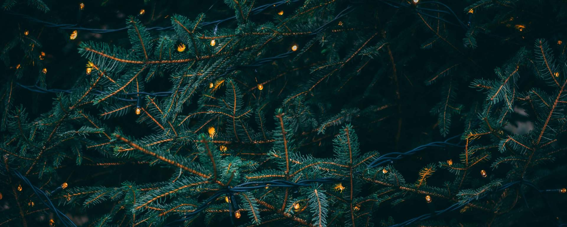 Tree foliage with fairy lights in it