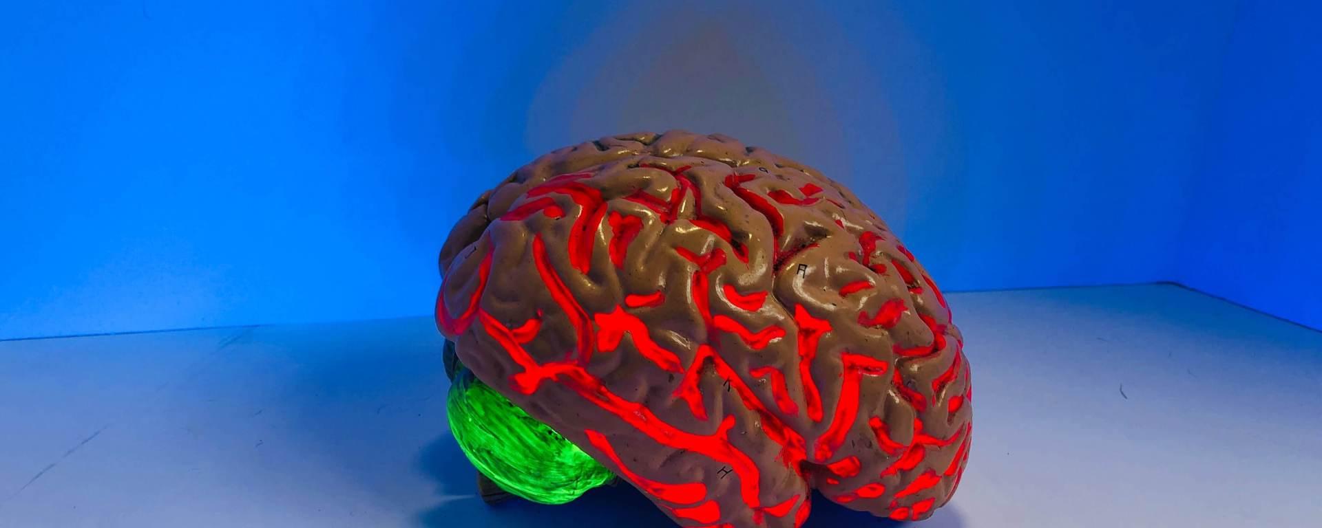 A model brain